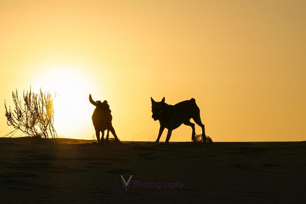 Dakhla - Westsahara / Marokko